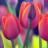 descubre_las_flores_mas_bonitas-1100x408