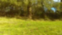 Behind Tree.jpg