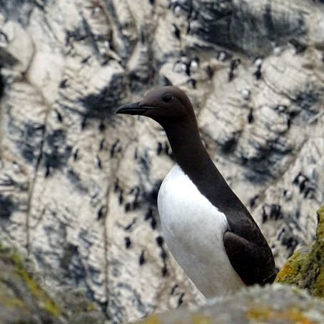A year in the life of a North Atlantic seabird
