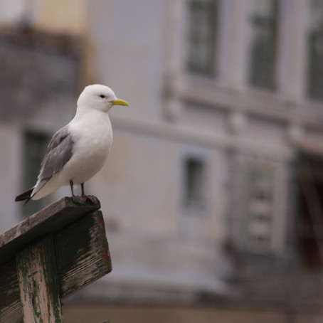 Kittiwakes in Cold Climates: Our 2021 Arctic Field Season
