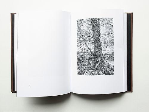 Trees Sect 3-3 x4.jpg