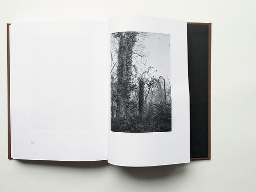 Trees Sect 4-2 x4.jpg