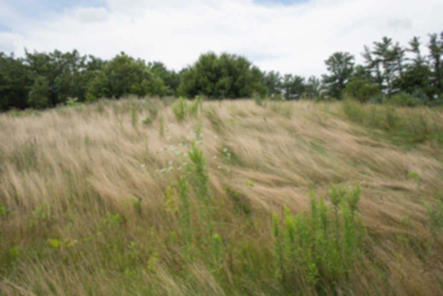 Kutztown Hill Grasses 96 1094.jpg