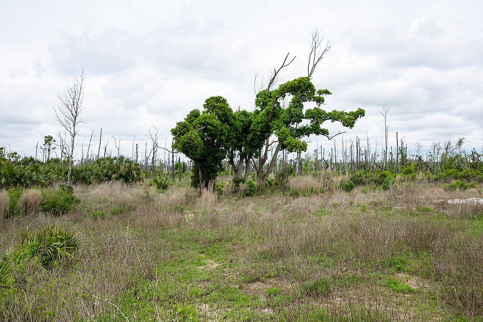 Mexico Berach Tree x5.jpg