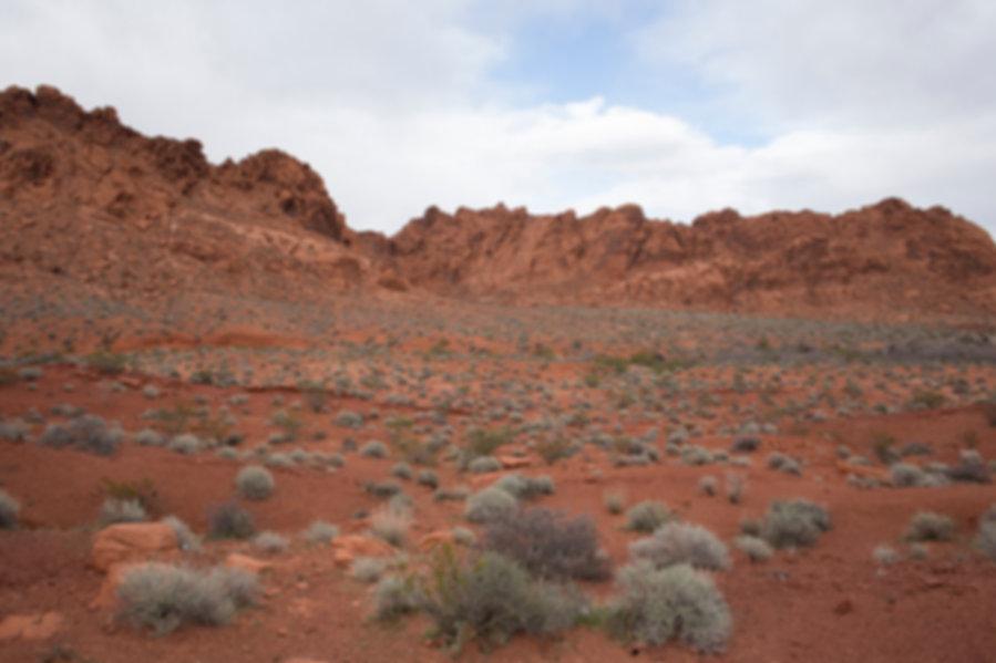 Las Vegas Valley Of Fire Plant FieldSmal
