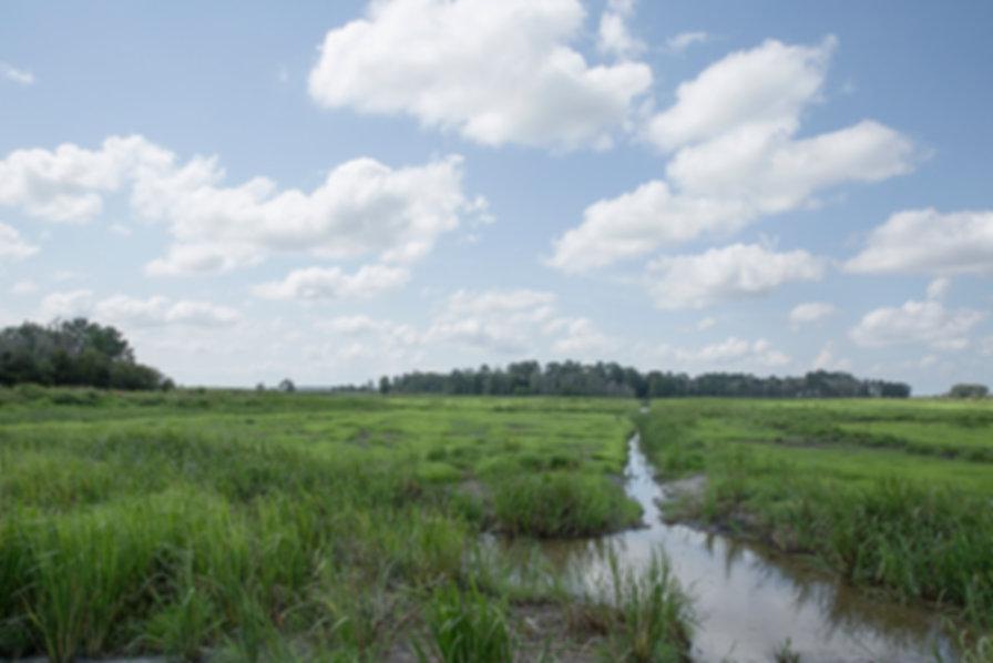 Edisto Ace Basin Former Rice Field 96 10