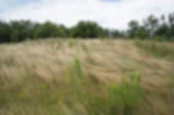 Kutztown Hill Grasses Small.jpg