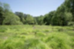 Atlanta Biltmore Drive Grasses Small.jpg
