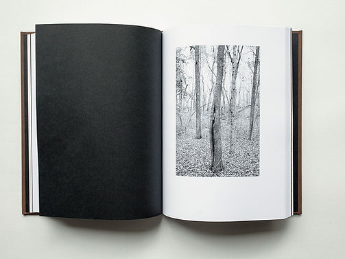 Trees Sect 3 1 x4.jpg