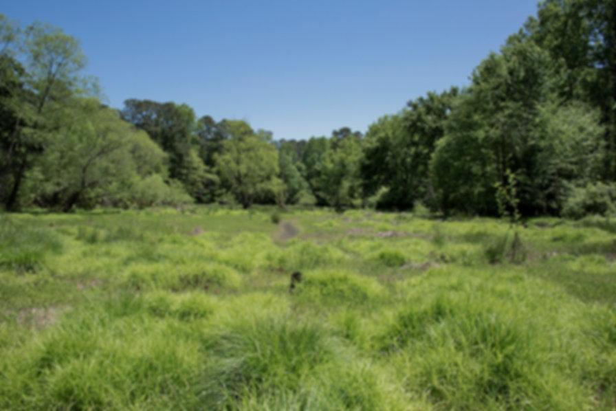 Atlanta Biltmore Drive Grasses 96 1094 2