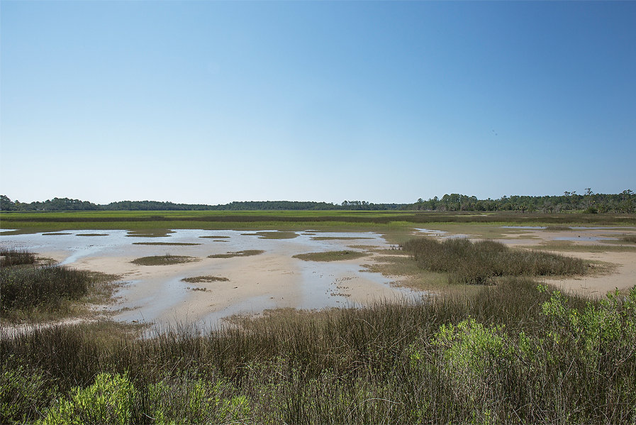 Edisto Low Tide Marsh 96 1094.jpg