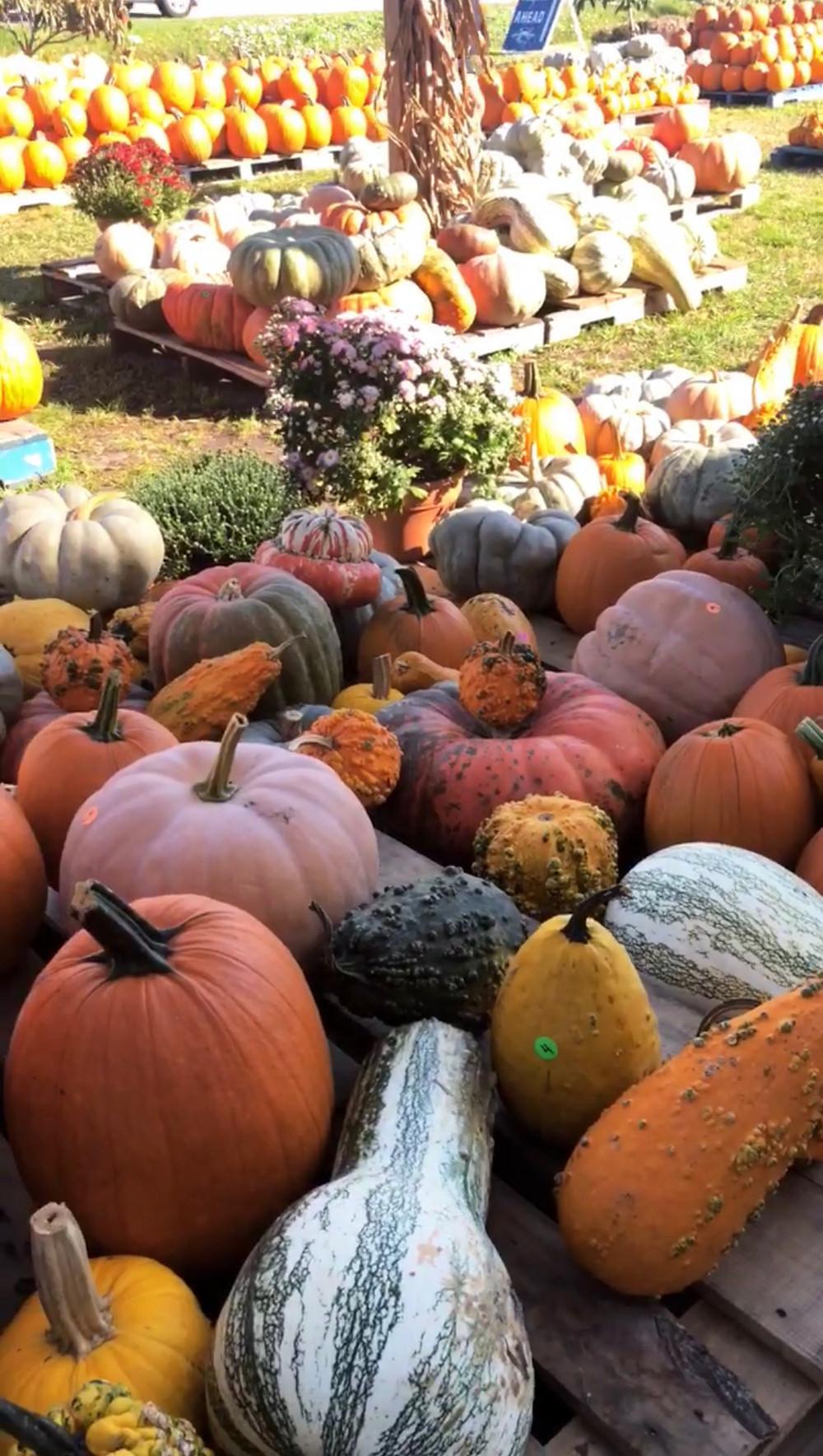 15+Fun+Fall+Activities+--+Mary+Hannah+Interiors+--+Studio+Blog+--+Fall+Season