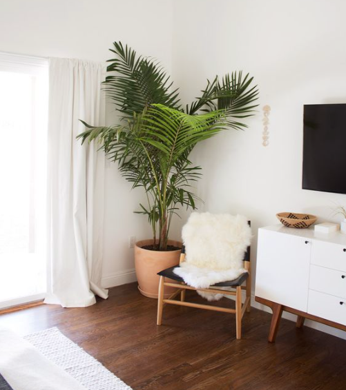 Plants+are+a+Must+in+Home+Decor+--+Mary+Hannah+Interiors+--+Studio+Blog