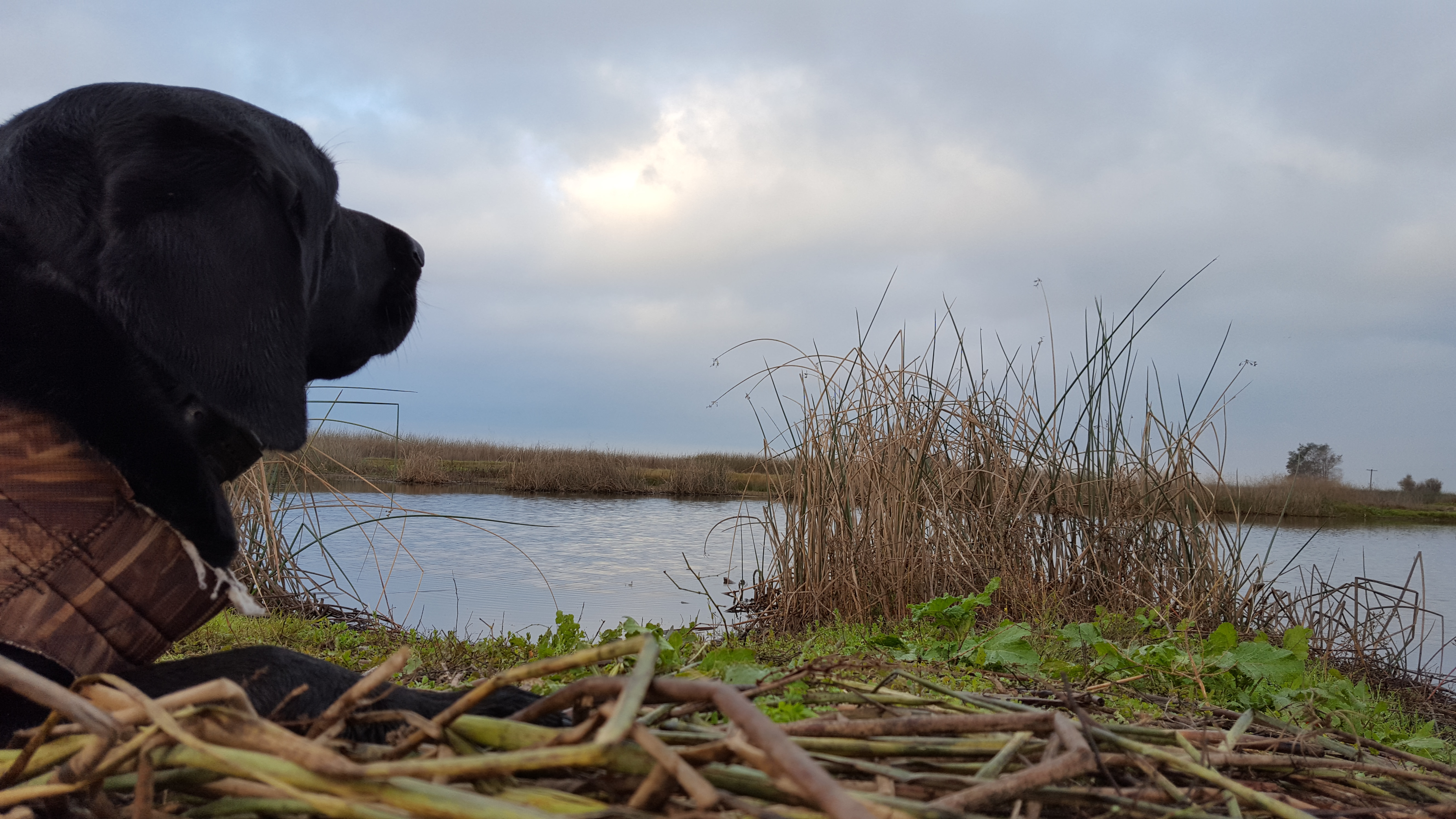 waterfowl blind 12