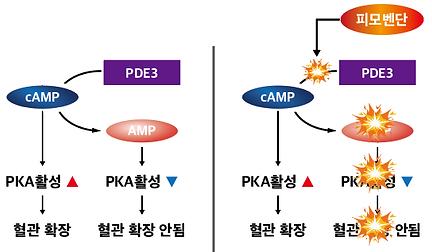 피모메딘_4.png
