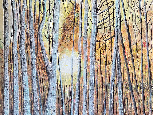 Sunrise Silver Birches