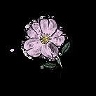 rose-artwork_edited_edited_edited_edited