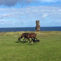 Caballos y Perros Isla