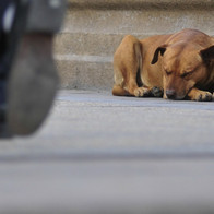 Perro en calle durmiendo