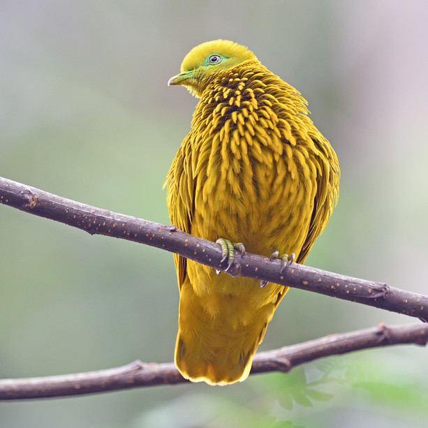 Birds and Wildlife of Asia and Oceania