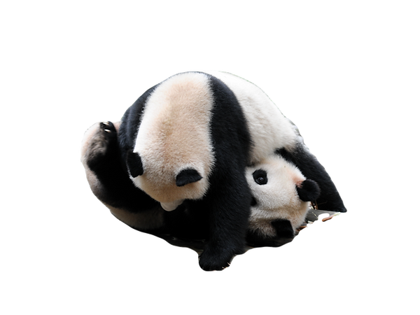 China Giant Panda_edited.png