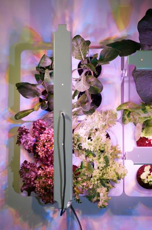 Antonio Scarponi / Conceptual Devices with Bulbo and Piccolo Veg for Pots, Orto Perpetuo, installation, 2014.