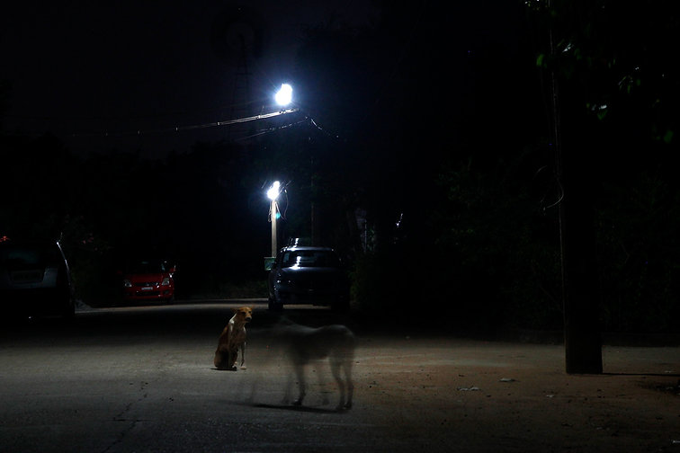 nightpict-dog2.jpg
