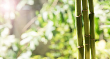 bamboo-YinYoga_NidraYoga_Lausanne.jpg