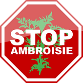 ambroisie.png