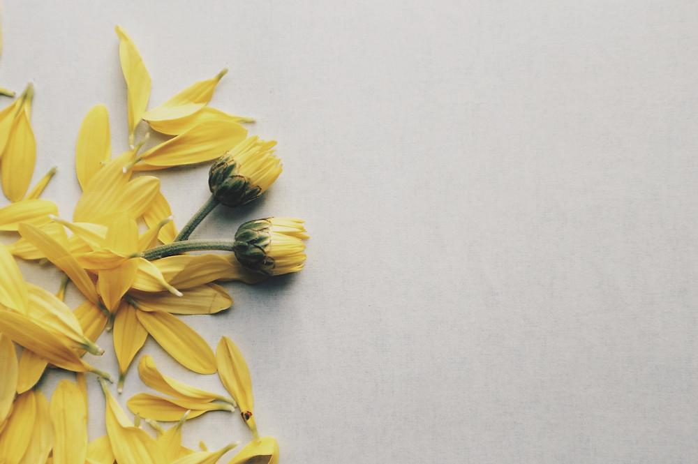 Flores amarelas em concreto cinza