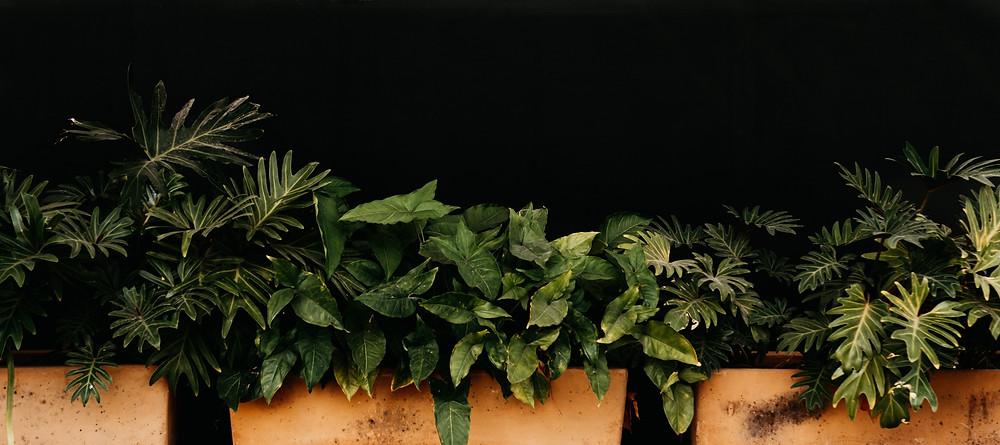 Jardineiras de diversas espécies de plantas