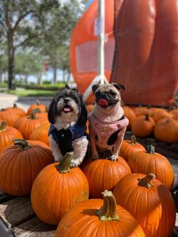 fall-dog-photos
