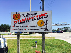 Pumpkins & More!