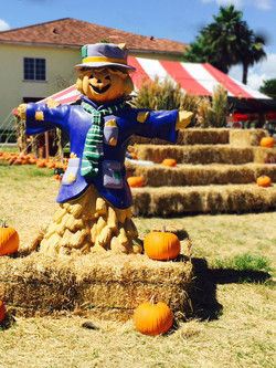 Welcome Scarecrow