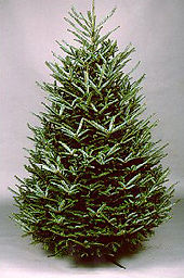 d92ff03c69e Order A Real Christmas Tree Online for Delivery in South Florida
