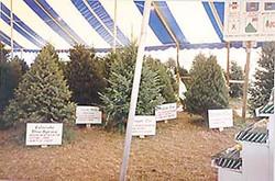 Tree Towne Lots