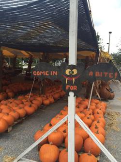 wellington pumpkin tent