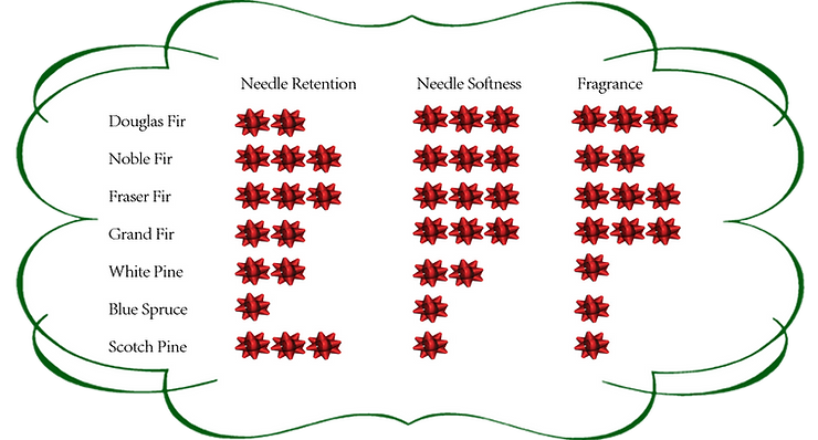 needle retention, softness and smell of christmas tree varieties