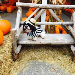 Puppy at Pumpkin Towne
