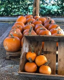 pumpkin-patch-wagon-florida