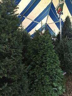 boynton beach christmas trees