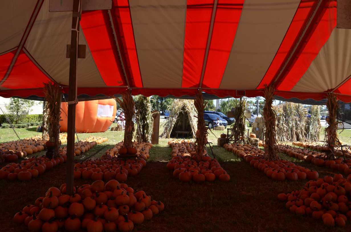 Pumpkin Tent