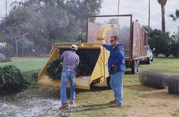 Chrsitmas Tree Recycling Mulch