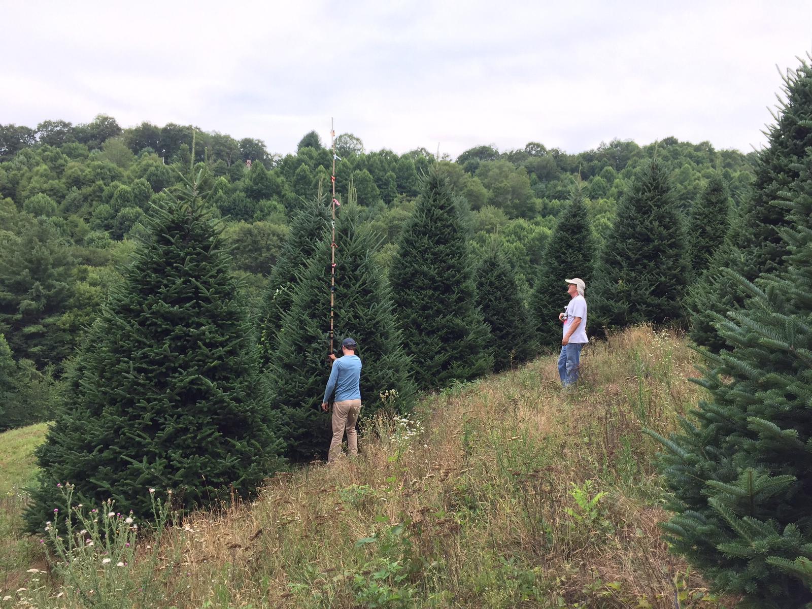 tree-tagging-2018