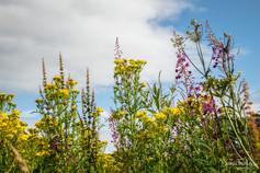 wildflowers_LarbertLoch_20200716 (8).jpg