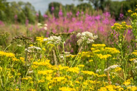 wildflowers_LarbertLoch_20200716.jpg