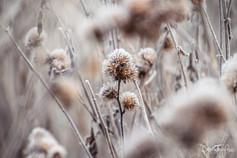 seedheads_LarbertLoch_20201129 (13).jpg