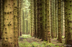 forest_Beecraigs_202103063.jpg