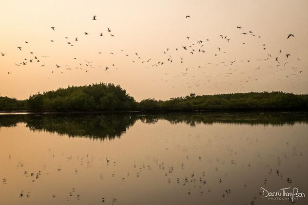 Seabird sunset