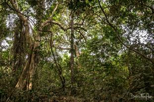 Abuko forest